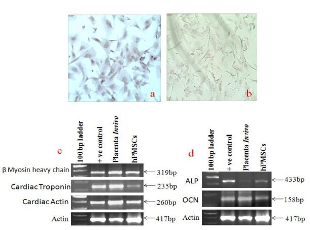 IBIMA Publishing Development and Molecular Characterization