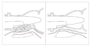 Figure 3 : a,b