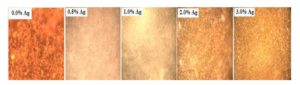 Micrographs of the sintered samples at 1500°C during 2 hours